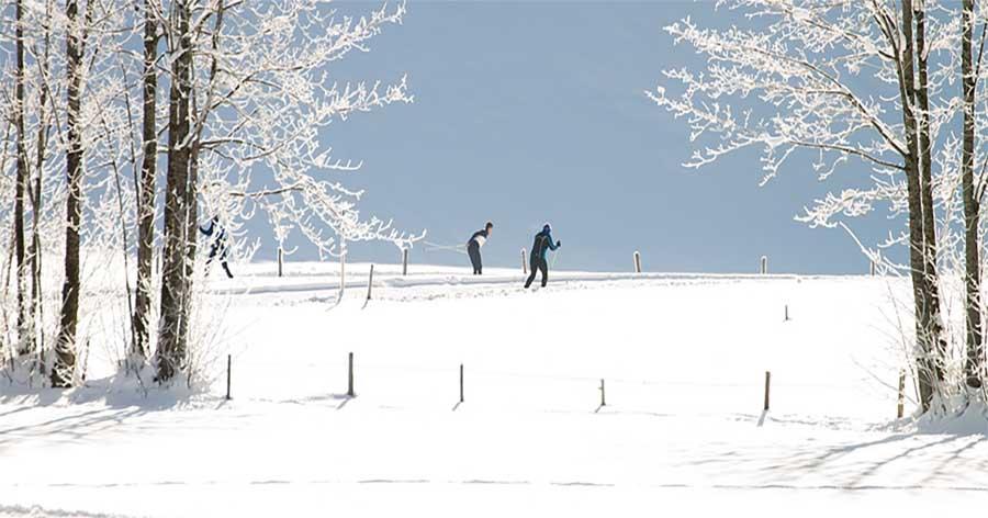 cross country skiiers in a winter landscape
